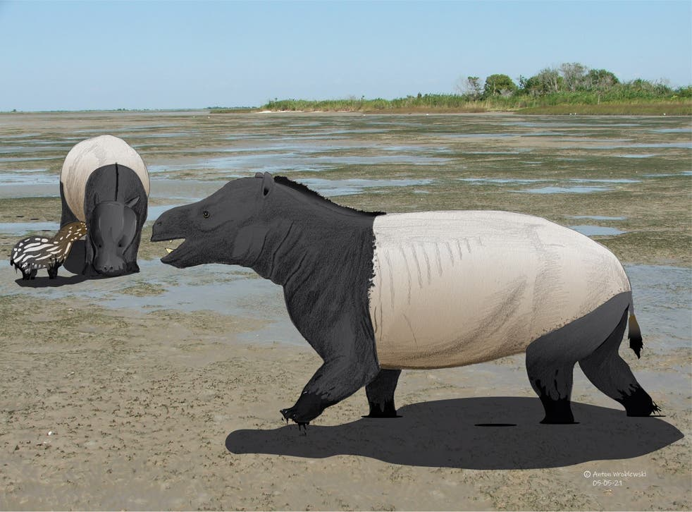 A reconstruction of the brown-bear-sized mammals, Coryphodon