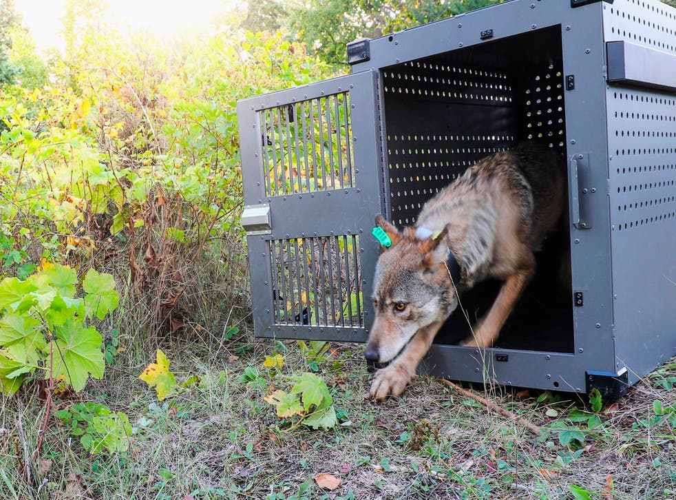 Wolves Protections