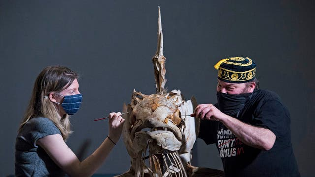 Member of staffs tighten screws and paint a Marlin skeleton, before it goes on display at the Natural History Museum in London, as the museum prepares to reopen to the public on 17 May, following the further easing of lockdown restrictions in England