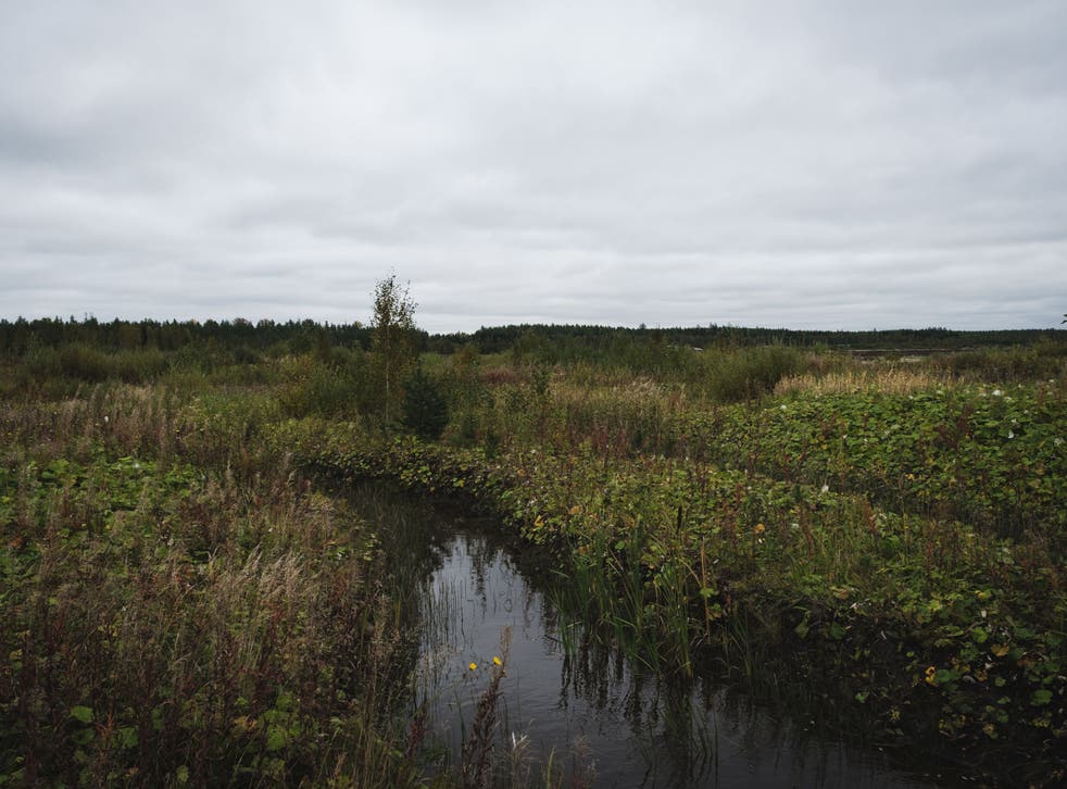 Peatlands store a third of the world's soil carbon