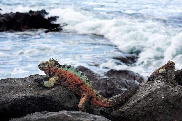 <p>Rewilding the Galapagos will involve reintroducing extinct species and re-establishing wildlife populations</p>