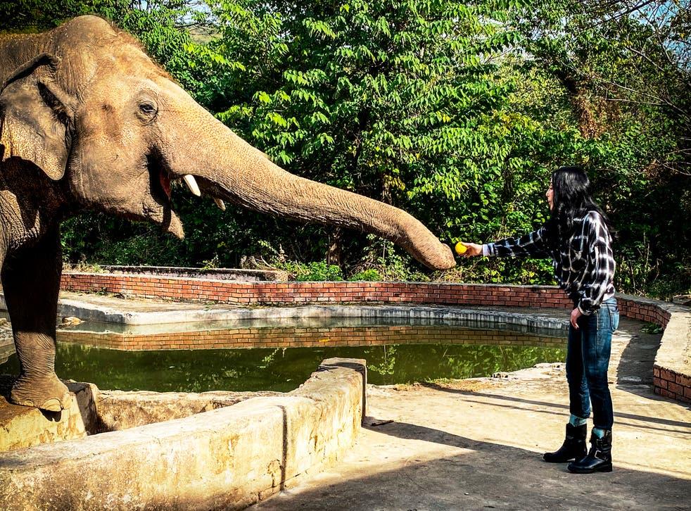 TV-Cher-Loneliest Elephant