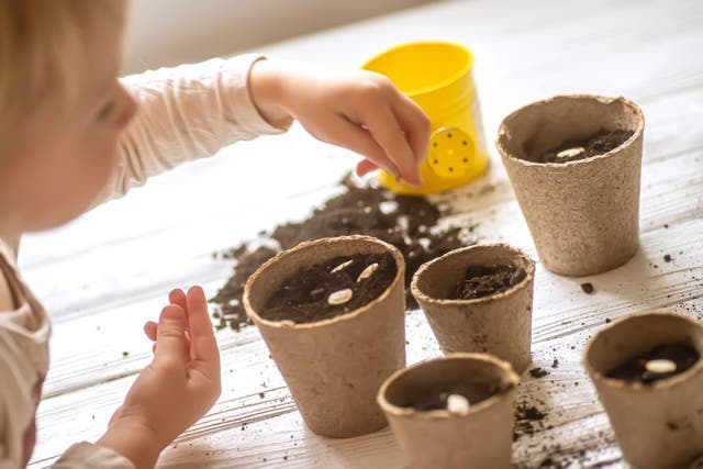A child sowing courgette seeds (Alamy/PA)