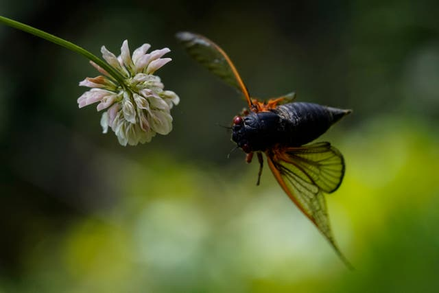 APTOPIX Cicada Photo Gallery