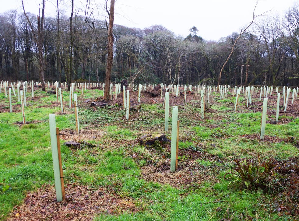Tree planting techniques will be studied alongside other methods of removing greenhouse gases from the atmosphere