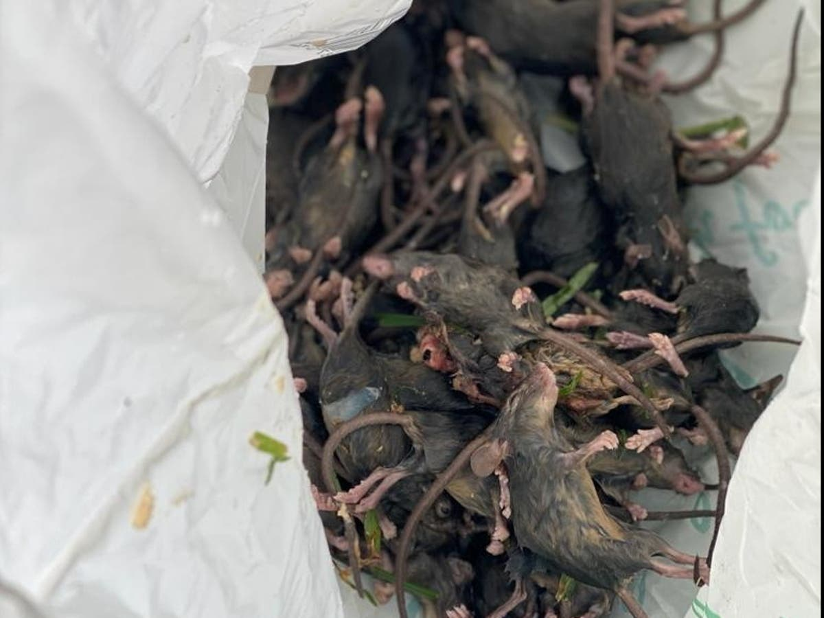 Family lose home in fire after 'mouse plague' chew through wires