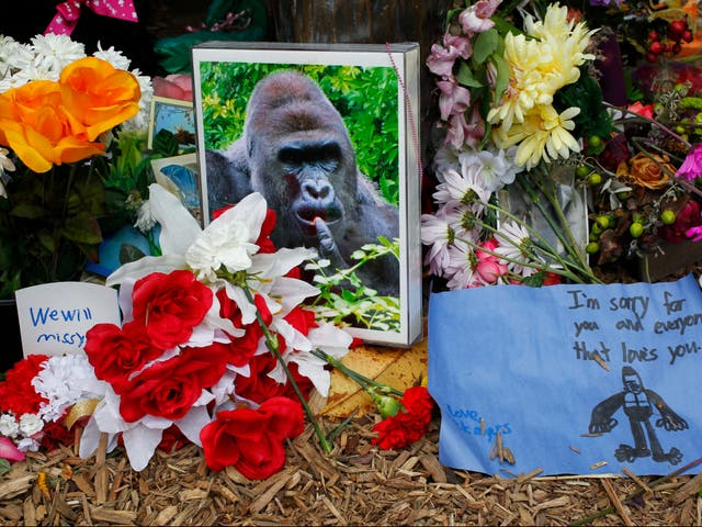 <p>Flowers lay around a bronze statue of a gorilla and her baby outside the Cincinnati Zoo's Gorilla World exhibit days after Harambe the gorilla was shot dead after a boy fell into his enclosure, on  2 June 2016 in Cincinnati, Ohio</p>