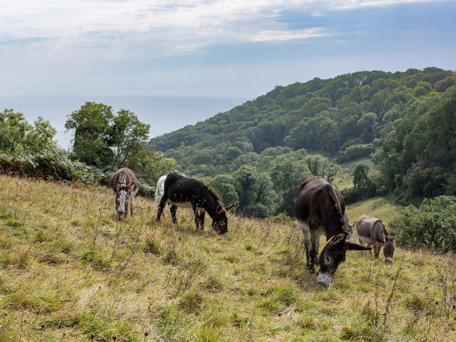 <p>Wild gardening: Donkeys' hooves can help boost the chances of the rare plants germinating</p>