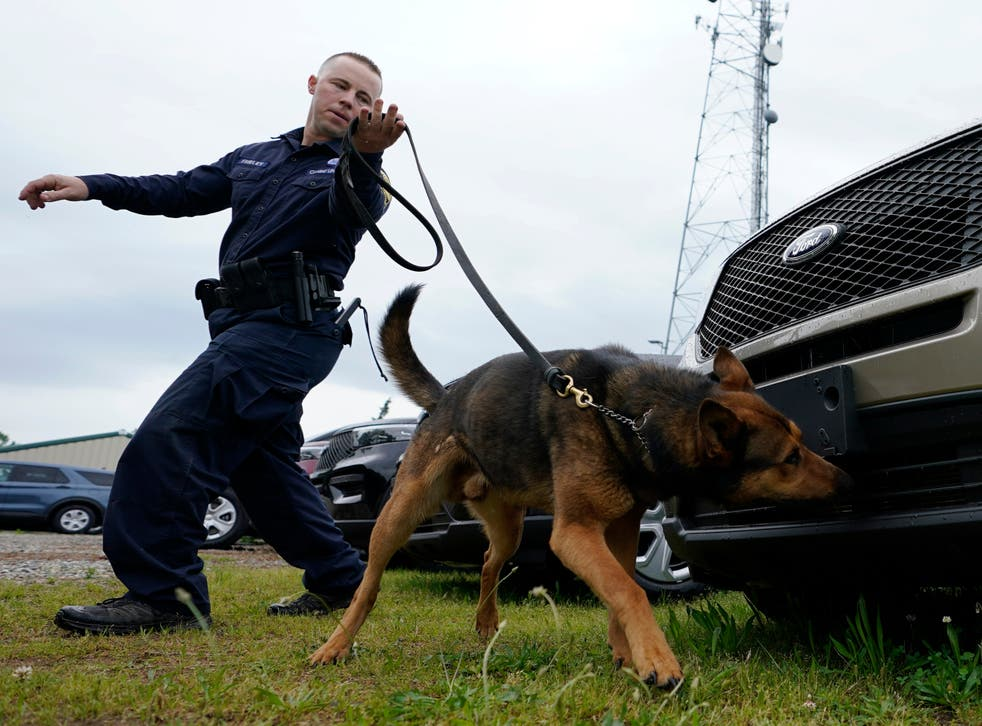 <p>K-9 sniffer dogs are at risk of losing their jobs due to more states legalizing marijuana </p>