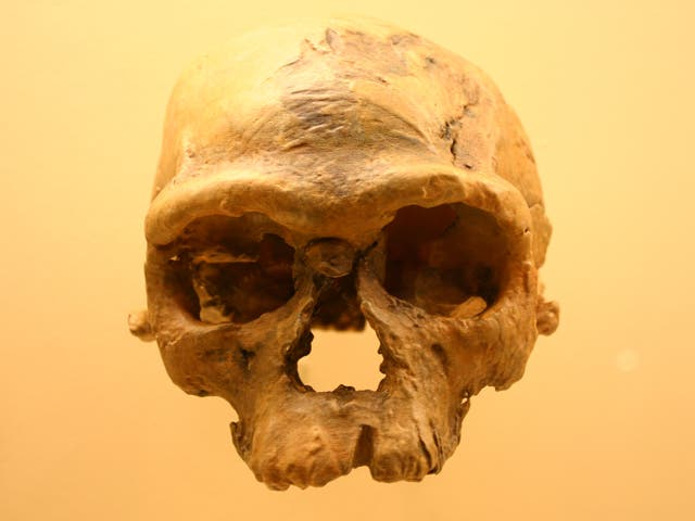 <p>Se cree que las rápidas reversiones del clima en África han impulsado el surgimiento del arcaico Homo Sapiens</p>
