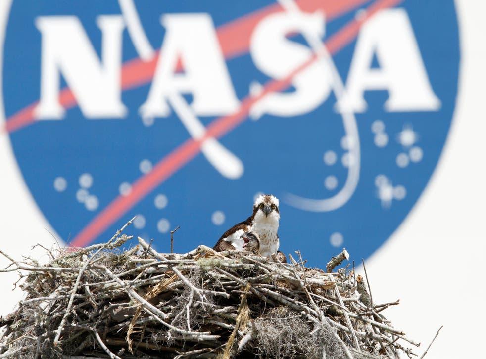 New Zealand NASA
