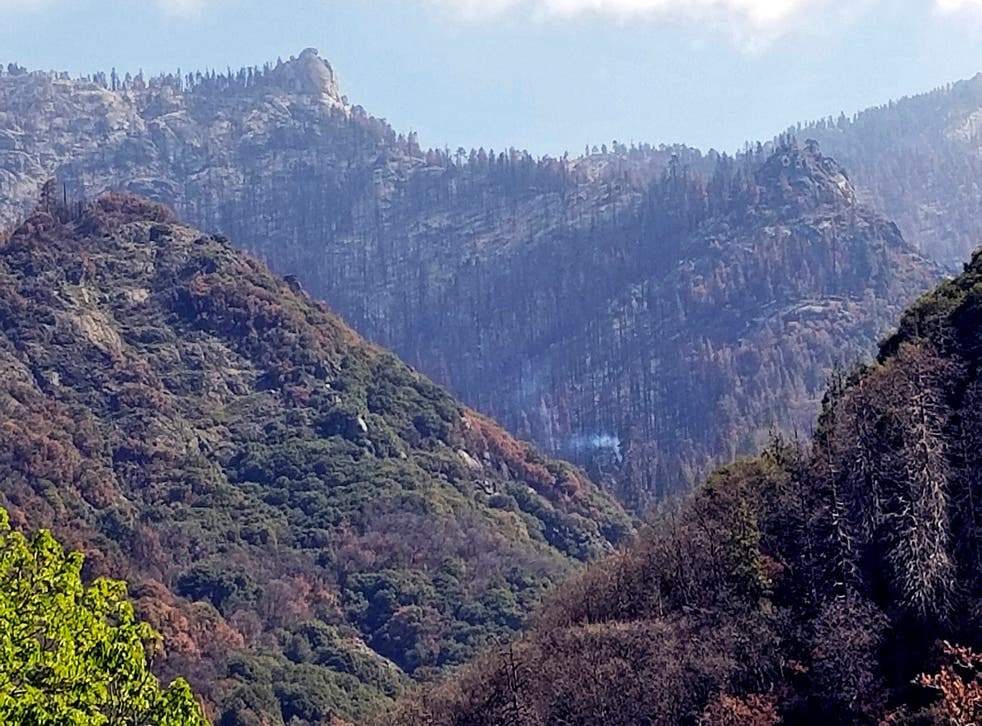 <p>California Wildfires Redwoods Killed</p>