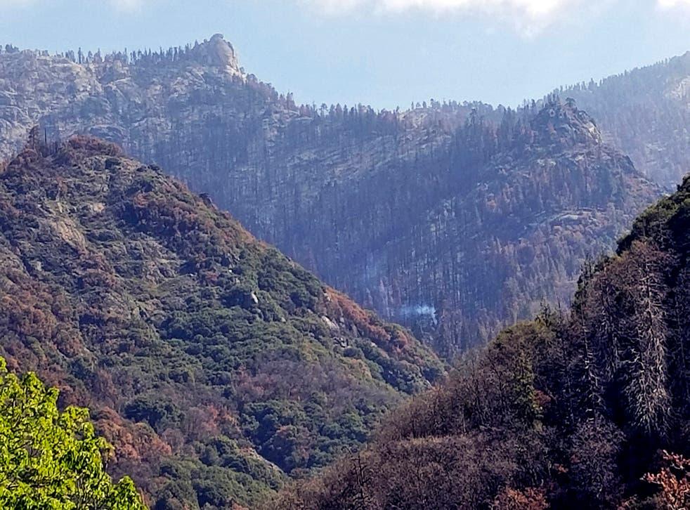 CALIFORNIA-INCENDIO FORESTAL-SECUOYAS