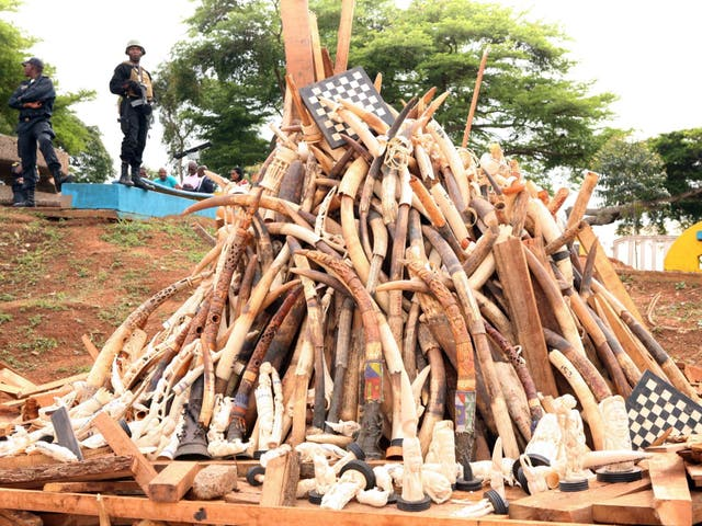 <p>Soldiers in Yaounde stand near a pile of ivory seized from poachers by the Cameroonian Service for the Protection of Wildlife and Forests</p>