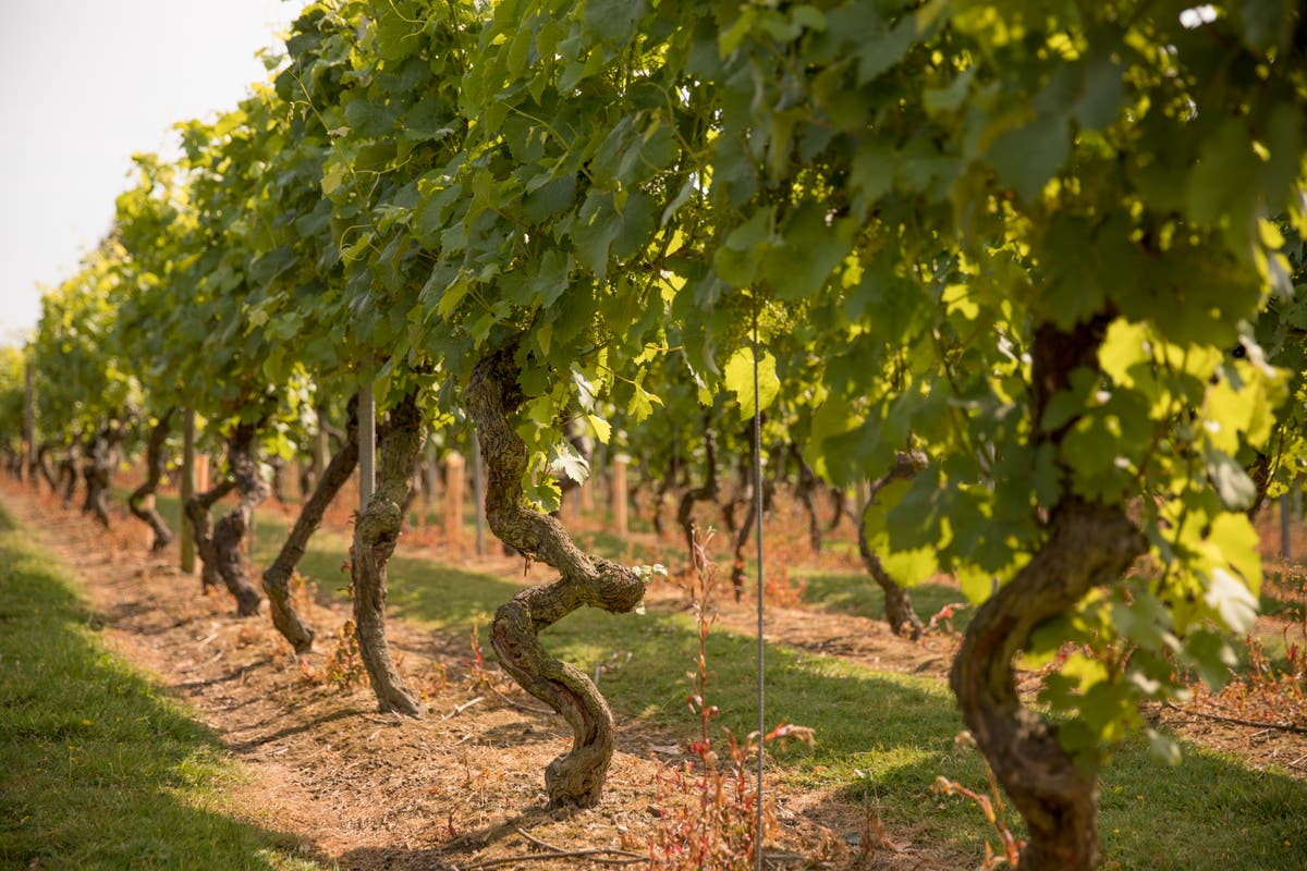 Champagne or prosecco? How about a glass of English sparkling? The next big wine region could be right on our doorstep