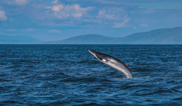 <p>The marine mammal was spotted on the beach near a wind farm on Tuesday (stock image)</p>