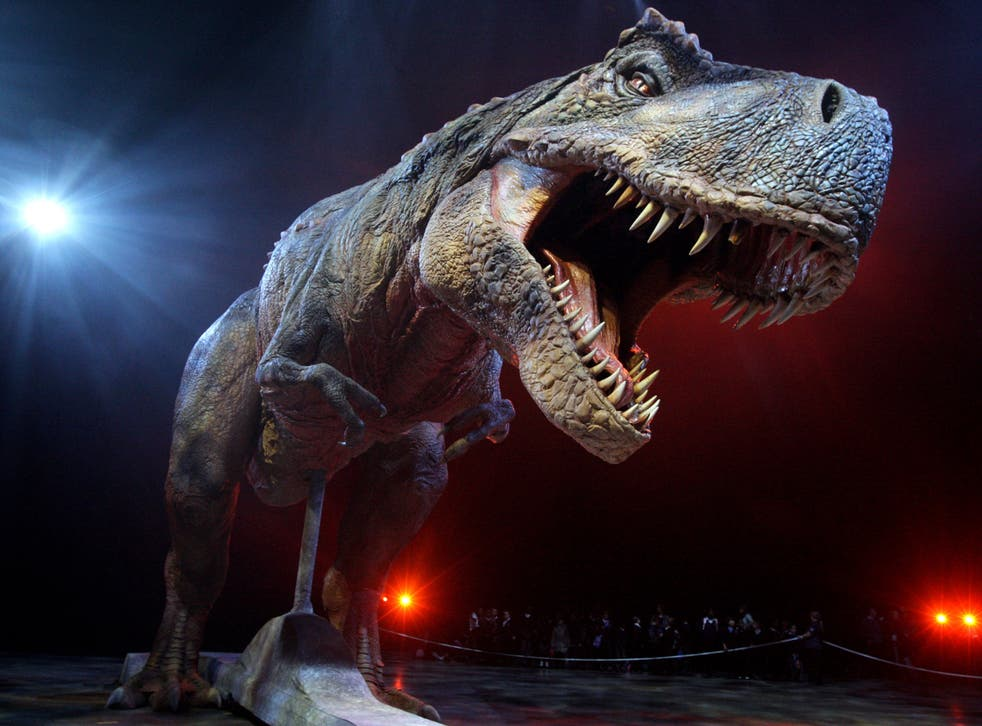 <p>An adult Tyrannosaurs Rex robotic dinosaur - that is not real</p>