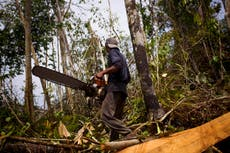 G7 summit: How can leaders help tackle deforestation and nature loss?