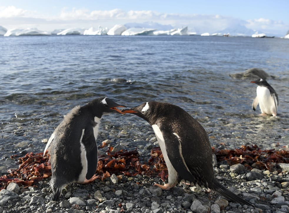 <p>Marine environment around Antarctica supports animal life including penguins, seals, whales and albatrosses, the WWF says</p>