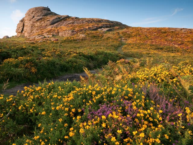 <p>Haytor on Dartmoor, owned by the Duchy of Cornwall. Centuries of human activity have left only tiny pockets of intact wilderness</p>