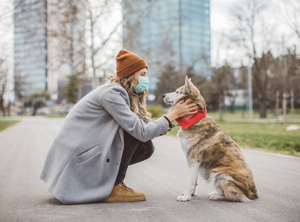 <p>Who knew that our dogs could tell if we're untrustworthy?</p>
