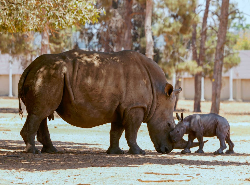 <p>Wildlife traffcking is wiping out rhinos, elephants and tigers </p>