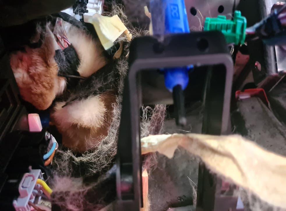 Rabbit trapped in van