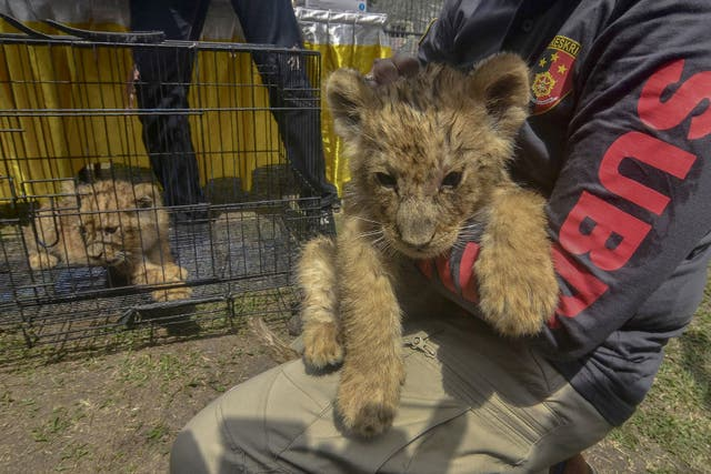 <p>Illegal wildlife trafficking is widespread in Southeast Asia</p>