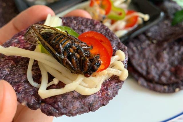 <p>Cicada ceviche, anyone?</p>