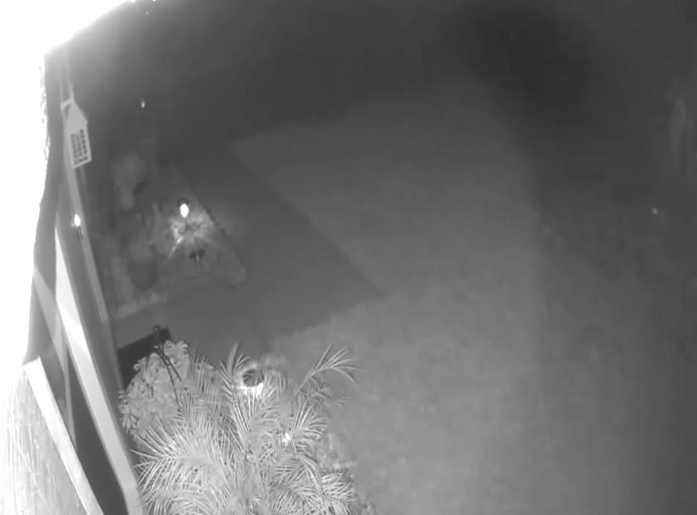 <p>A 'dinosaur' runs across Florida resident's yard</p>