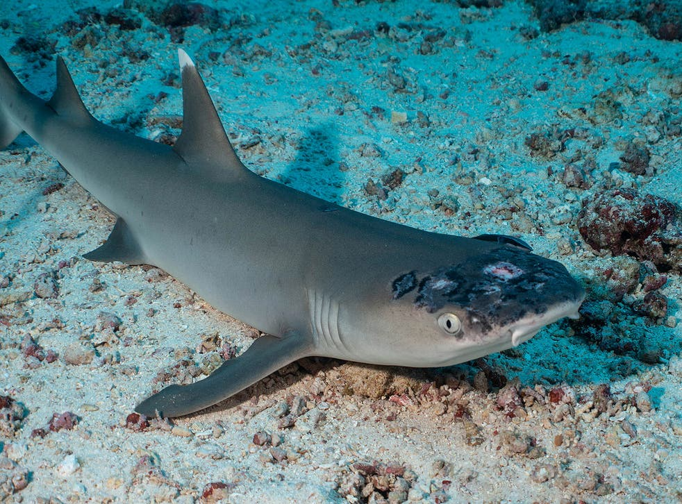 <p>Picutres of the sharks went viral in April</p>