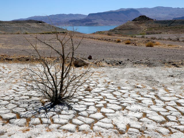 Lake Mead is seen in the distance behind a dead creosote bush in an area of dry, cracked earth that used to be underwater