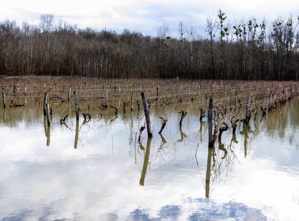 Climate France Frost Damage