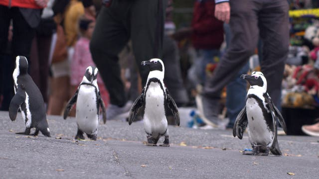 TV Penguin Town