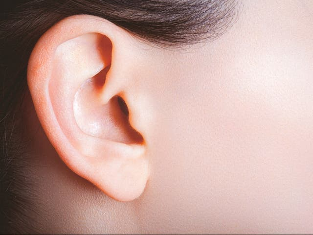 <p>Female ear and part of a cheek viewed from the side</p>