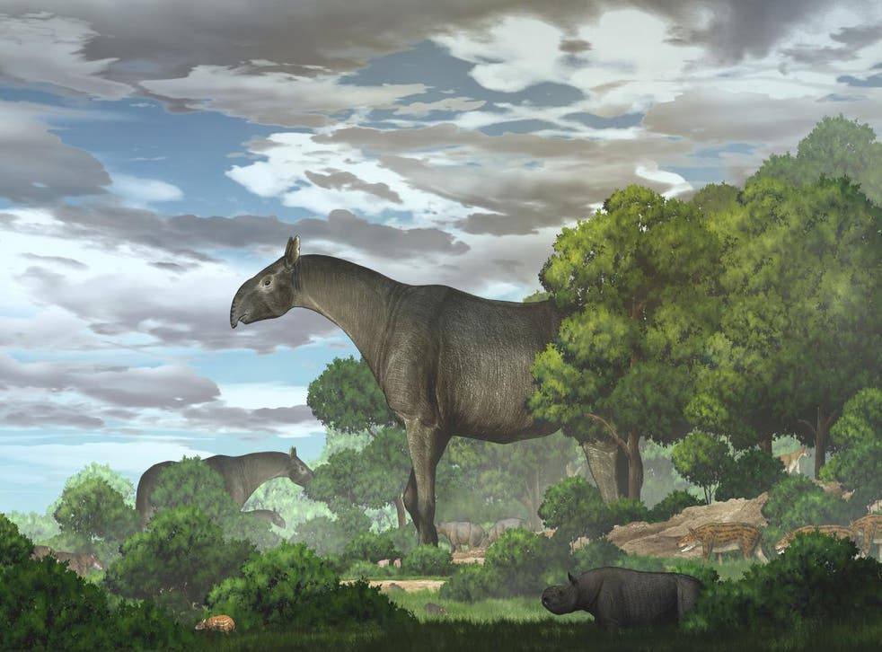 <p>Ecological reconstruction of giant rhinos and their accompanying fauna in the Linxia Basin during the Oligocene</p>