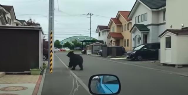<p>Varios vuelos y escuelas fueron cerrados en la ciudad japonesa de Sapporo después de que se encontrara a un oso galopando por las calles. El animal también ingresó a una base militar donde hirió al menos a cuatro personas. Más tarde fue asesinado a tiros. Captura de pantalla.</p>