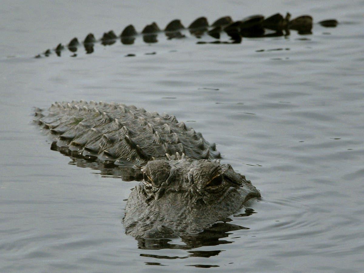 Vacationing children lasso Florida alligator with noose - independent