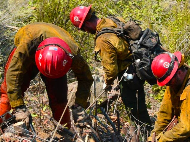 <p>A group of firefighter monks clearing brush in California</p>