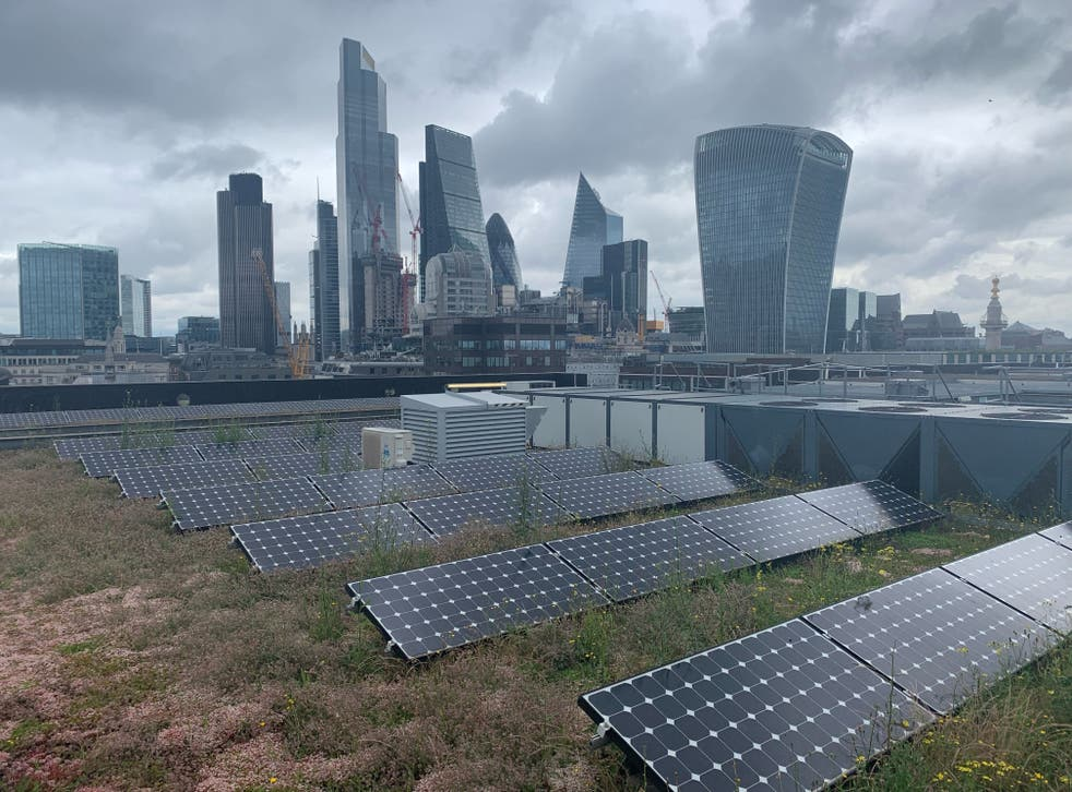 <p>Nomura's rooftop garden in the City of London hosts 159 plant species</p>