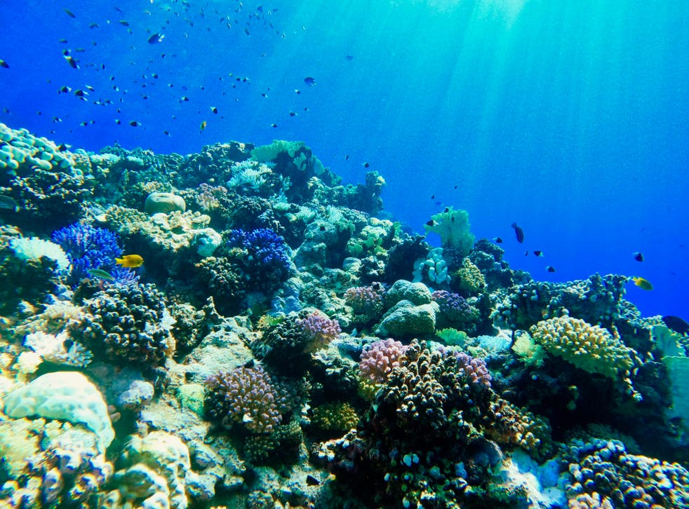 <p>Red Sea coral has shown incredible resilience against climate change</p>