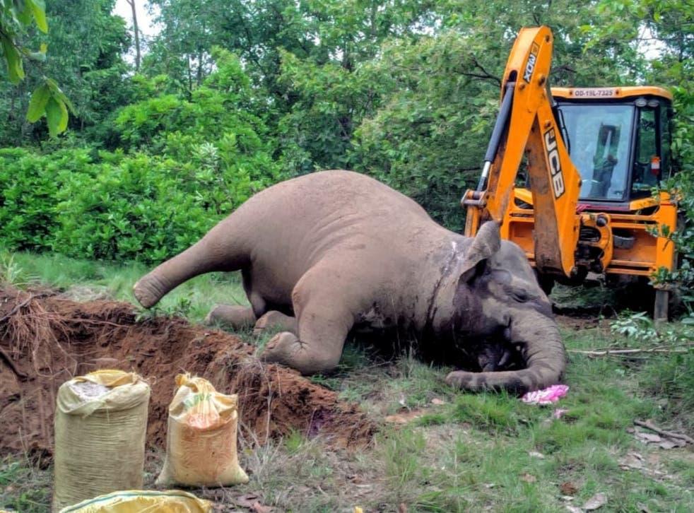 <p>An elephant burial: 'A silent catastrophe is unfolding across India,' says Sangita Iyer</p>
