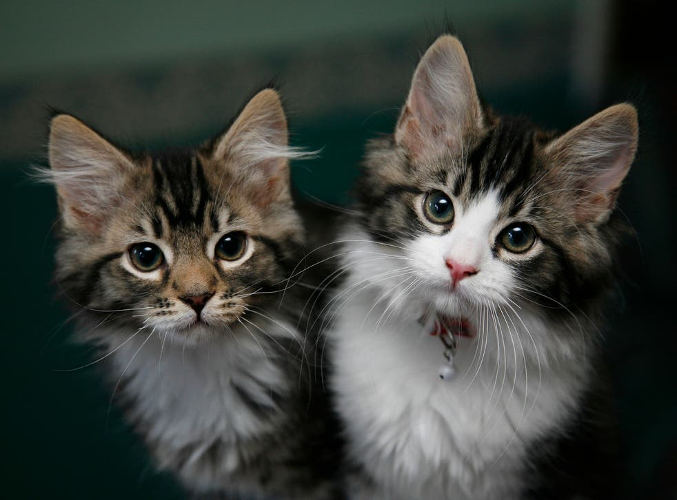 Food recall as hundreds of cats die from 'heartbreaking' rare illness   The  Independent