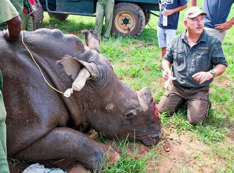 <p>Dr Johan Marais is one of only a few 'wild vets' helping to reconstruct the faces of poached rhinos</p>