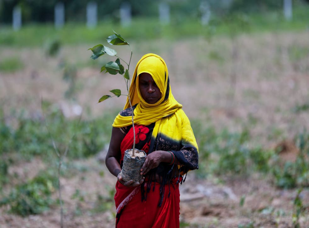 <p>A labourer prepares to plant saplings for an annual tree plantation campaign on the outskirts of Prayagraj in northern Uttar Pradesh state, India</p>