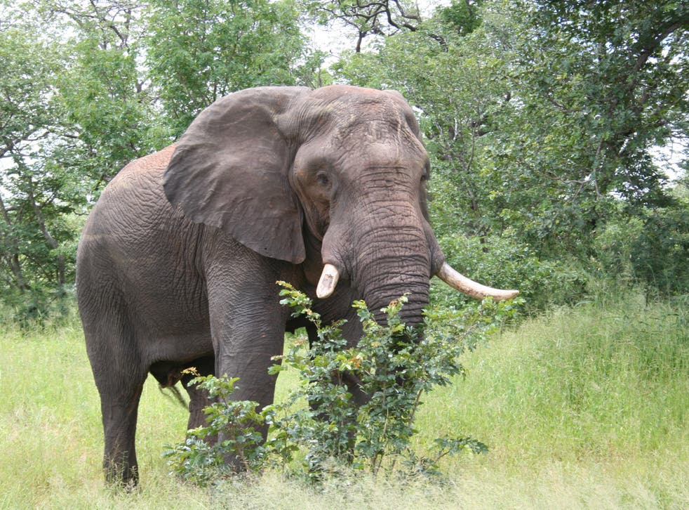 <p>The elephants, weighing over 25 tonnes in total, will be flown from Kent to Kenya</p>