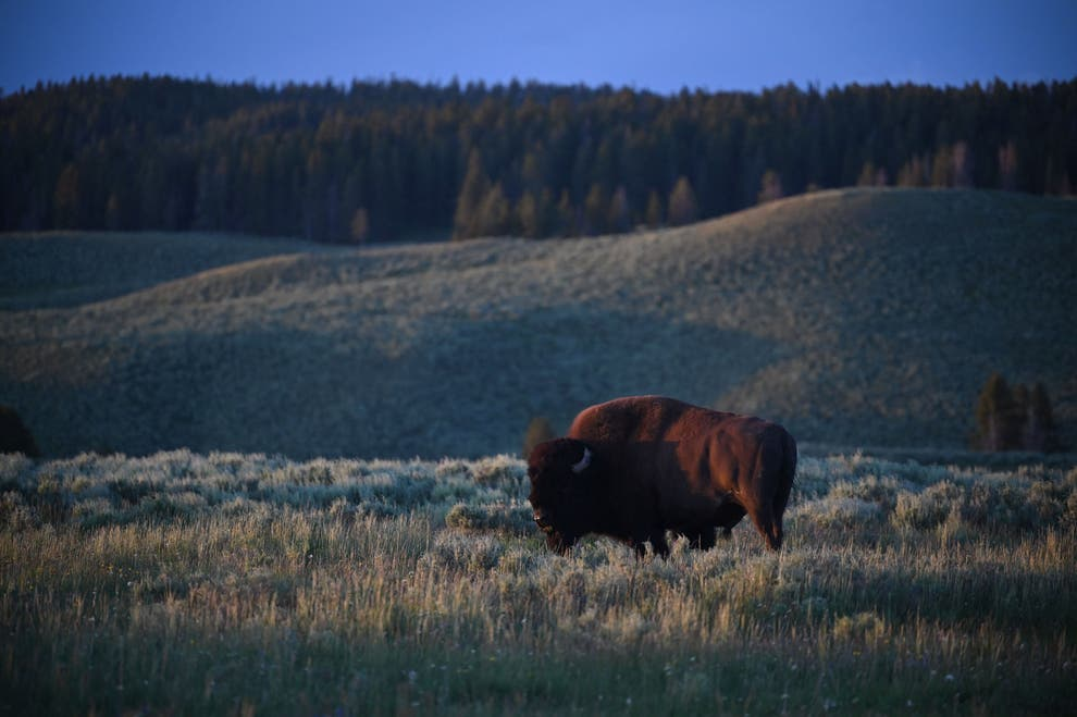 How Wyoming become the unlikely Bitcoin capital of America,harbouchanews