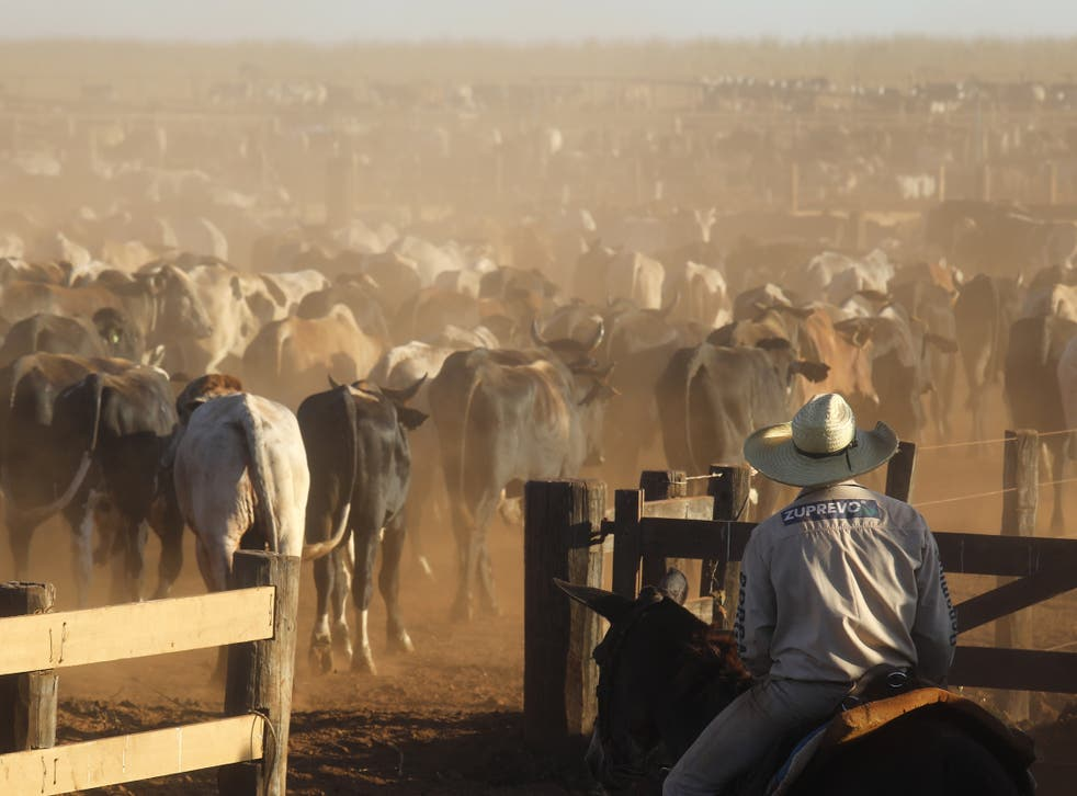 <p>In Brazil, the world's largest exporter of red meat, trees are razed to make way for cattle ranching</p>