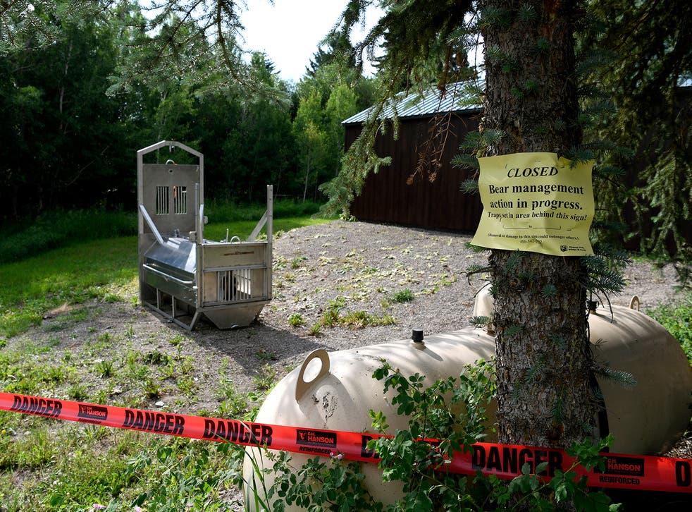 <p>A bear trap was set near the Ovando camping site where Leah Davis Lokan was killed</p>