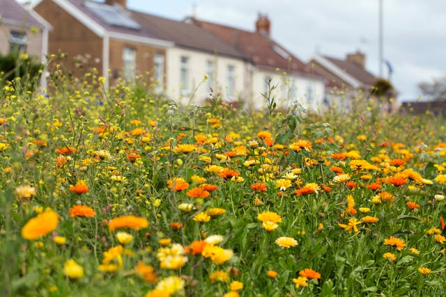 <p>A wildflower garden is a beautiful thing</p>